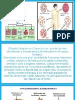 6.-TEJIDO-CONECTIVO.-2018 (1)