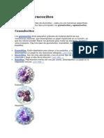 Tipos de Leucocitos