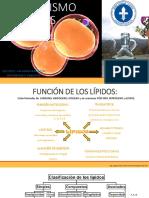 8 Metabolismo de Lipidos