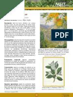 Canelo.pdf