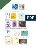 MICRO parasitos.docx