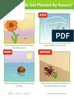 Dispersión de las semillas