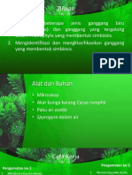 Alga Simbiosis