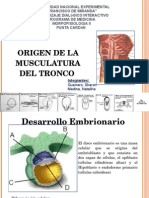 Seminario Origen Embrionario de La Musculatura Del Tronco