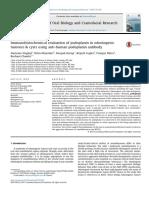 3.Podoplanin Antibody Main