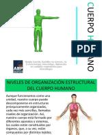 Organizacion General Del Cuerpo Humano c