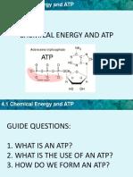 1atp Adp Cycle
