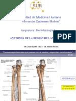 3. Anatomia Antebrazo