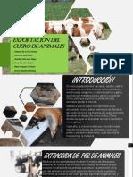 EXPORTACIÓN-DEL-CUERO-DE-ANIMALES.pptx