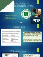 Biotecnologías Reproductivas en Ovinos Sincronización de Celos