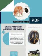Babesia 123.pptx