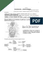 Biologia Comun - Aparato Digestivo