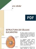 5 - Estructura Celular