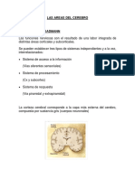 AREAS DEL CEREBRO.docx