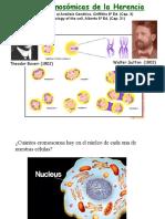 3. mitosis-y-meiosis biología molecular.pdf