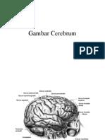 Gambar Cerebrum