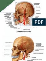 Vascularisasi otak.ppt