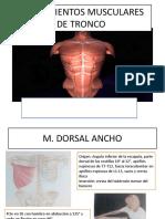 Estiramientos Musculares de Tronco