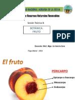Teoria 8 Botanica