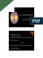 Adrenal Color