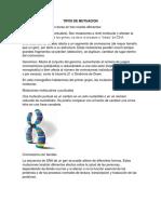 TIPOS DE MUTUACION.docx