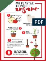 Cómo Plantar Tu Propio Manzano