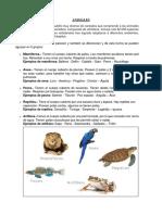 Animales Vertebrados y Invertebrados