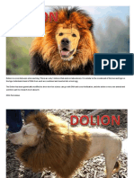 Dolion is a Cross Between a Lion and Dog