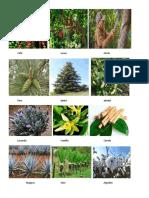 animales y tipos de plantas.docx