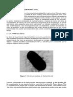 Principios de La Microbiologia