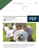 9 Razas de Perros Que Viven Más Años, Según El Encantador de Perros, César Millán - VIX