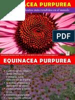 Equinacea Purpurea Completo 2019