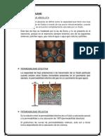 TIPOS DE PERMEABILIDAD.docx