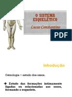 Anatomia - Sistema Esquelético alunos (1)