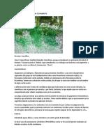 Algas verdes - azules