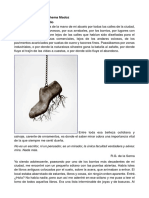 Química, fotografía y Chema Madoz.pdf