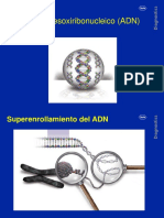 Acido Desoxiribonucleico ADN