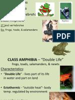 5 - amphibians - weebly