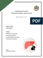 Biopsia hepatica conejo