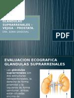 GLANDULAS SUPRARRENALES – VEJIGA – PROSTATA.pptx