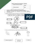 prueba de 1° Ciencias Naturales - la planta