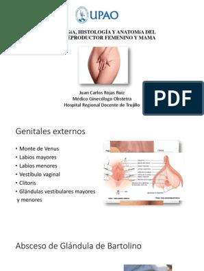glandula de bartolino anatomia pdf