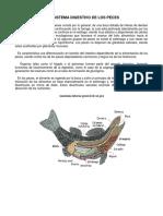 465 2013-08-22 m5 Aparato Digestivo
