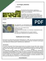 Los Hongos y Bacterias