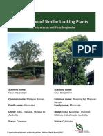 Ficus-microcarpa-and-Ficus-benjamina-Oct-2017.pdf