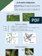 Producción y Manejo de Forrajes- La Planta Forrajera- Parte 1