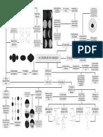 MAPA MENTAL GALILEO.pdf