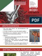 Lista Roja de especies amenazadas - Anfibios