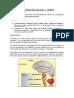 Diferencia Entre Encéfalo y Cerebro
