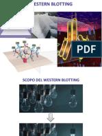 6deg Western e Dot Blot-2018.pdf